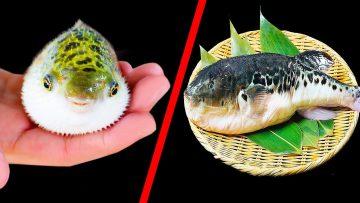 Japonya'ya Yolunuz Düşerse Bu Balığı Sakın Yemeyin