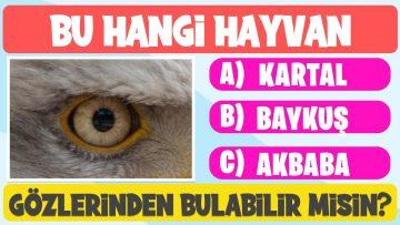 HAYVAN BULMACA YARIŞMASI : 10 Hayvandan Kaçını Bulabilirsin? Eğlenceli Hayvan Bulmacaları